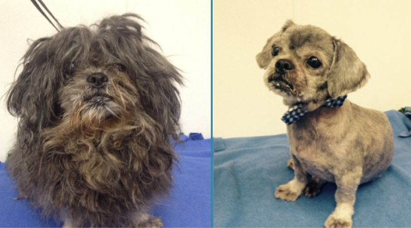 Mouse won the prize of top shelter dog makeover.