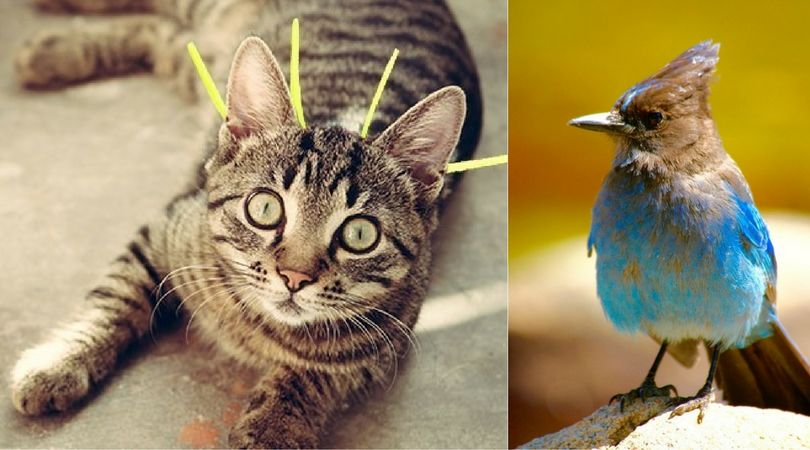 It May Look Funny, but This Cat Collar Is Designed to Save Birds