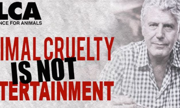 Animal Advocacy Group to CNN: Stop Promoting Animal Cruelty on 'Anthony Bourdain: Parts Unknown'