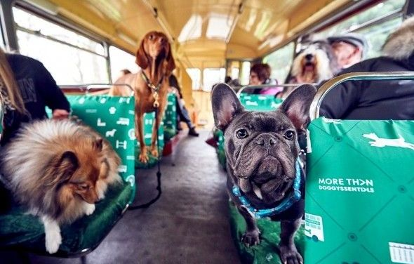 Hop on the K9 Bus for London's 'Dog Bus Tour'