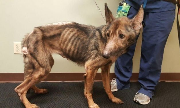 Sign: Justice for Neglected Dogs Left to Waste Away