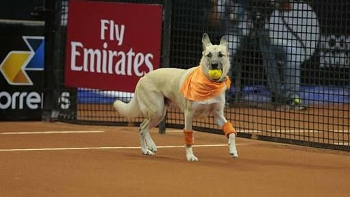 "Rescue Dogs Make the Best ""Ball Boys"" at Tennis Games"