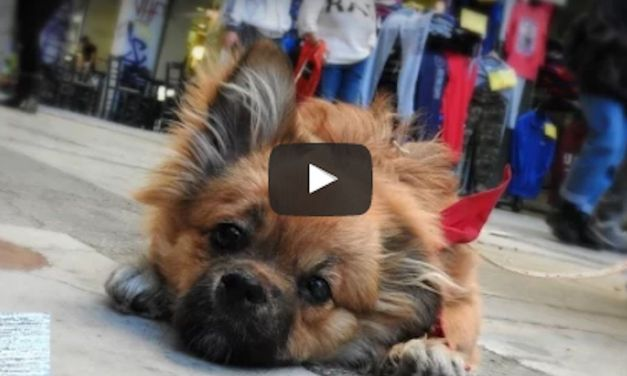 "Puppy Abandoned for Being ""Different"" Just Can't Hide His Joy (Video)"