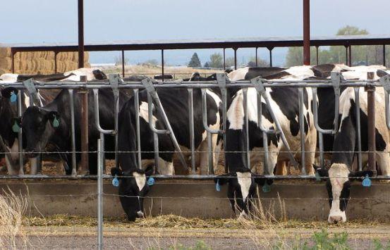 Cargill sells last cattle feed yards.