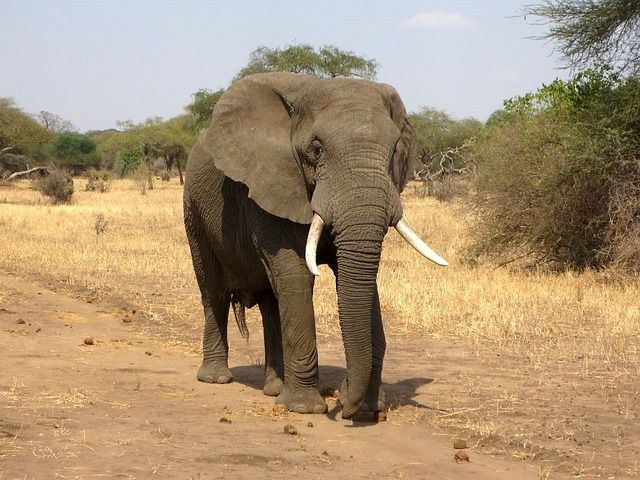 Victory! Court Stops Export of Elephant to Dubai Circus