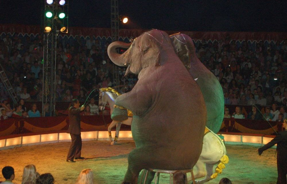 In a Win Against Cruelty, New York City Bans Wild Animals in the Circus