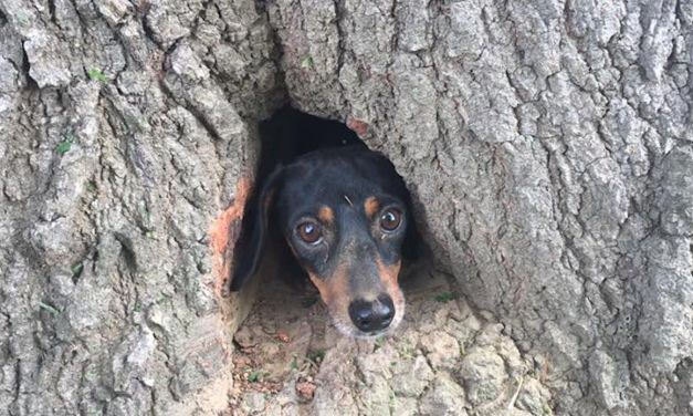 Dog Hopelessly Trapped Inside Tree Rescued By State Troopers