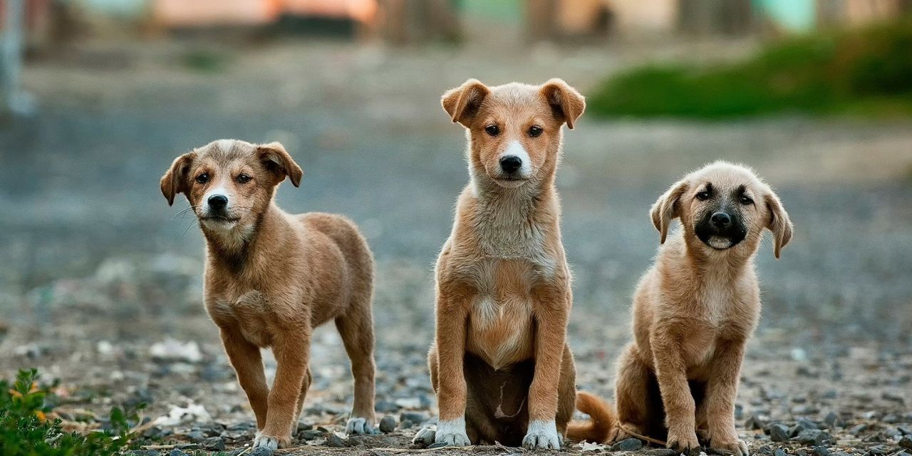 CA Assembly Passes Landmark Bill Banning Sale of Puppy Mill Dogs