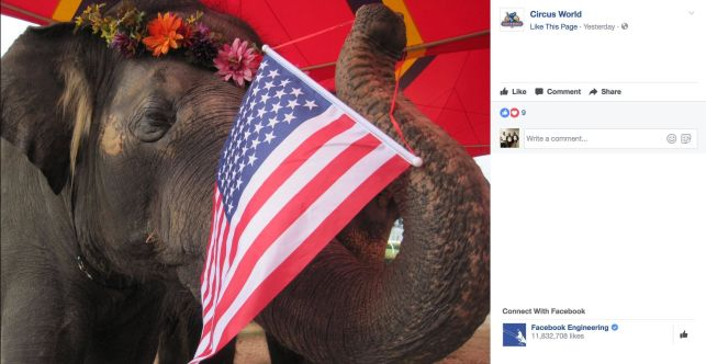 Circus elephant waving flag.