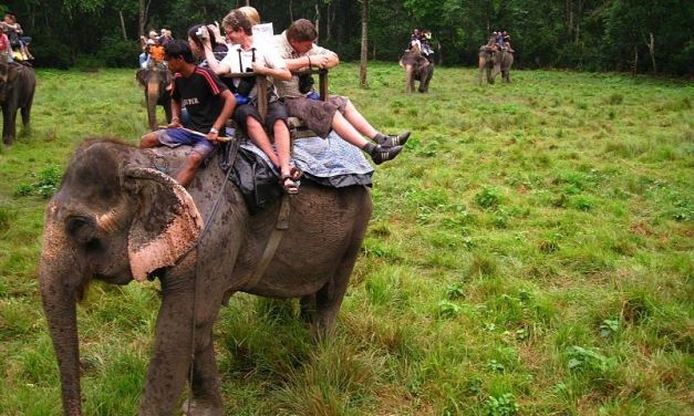 Bravo! This Tourism Company Has Stopped Cruel Elephant Rides