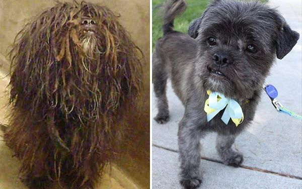 Behold: The Most Amazing Shelter Dog Makeover Contest!