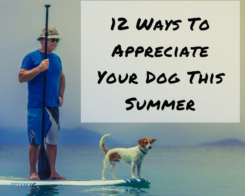 12 Ways To Appreciate Your Dog This Summer