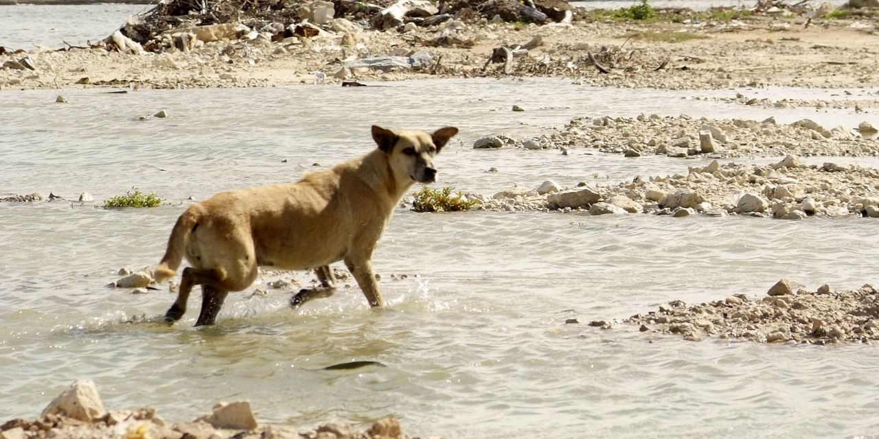 Lessons from Harvey and Irma: Checklist to Protect Your Pets when Disaster Strikes