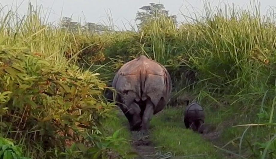 New Baby Rhino Spotted – A Symbol of Hope For a Species Ravaged by Poachers