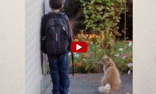 VIDEO:  Cat 'Bodyguard' Waits with His Best Friend for the School Bus Every Day