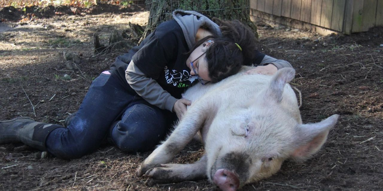'Called to Rescue' Film Celebrates Those who Spend Their Lives Helping Farm Animals