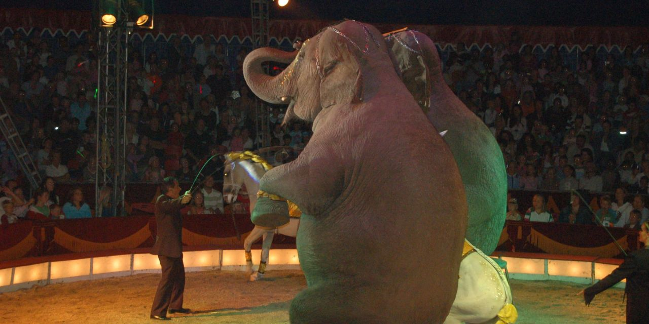 Good News for Elephants! Paris Moves to Ban Animals in the Circus