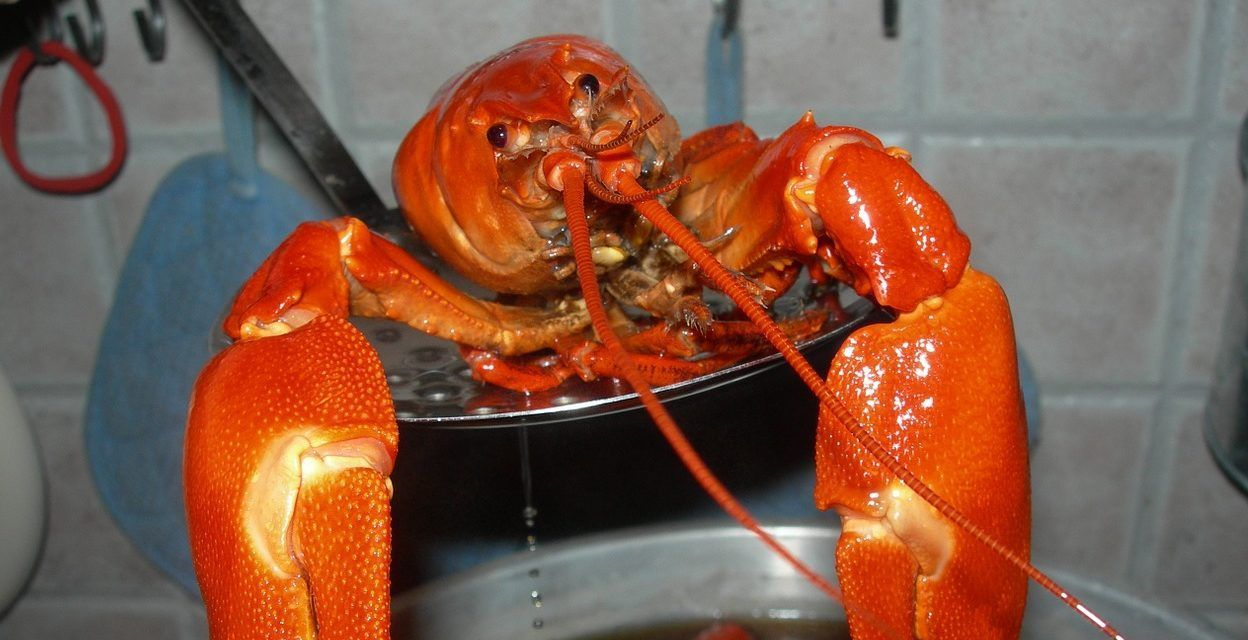 Switzerland Bans Boiling Lobsters Alive – Because It's Animal Cruelty