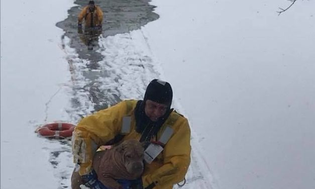 Firemen Wade Through Frozen Lake to Save Dog Who Fell Through the Ice