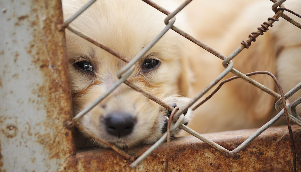 Sign the Petition: Stop the Horrific Dog And Cat Meat Trade in China