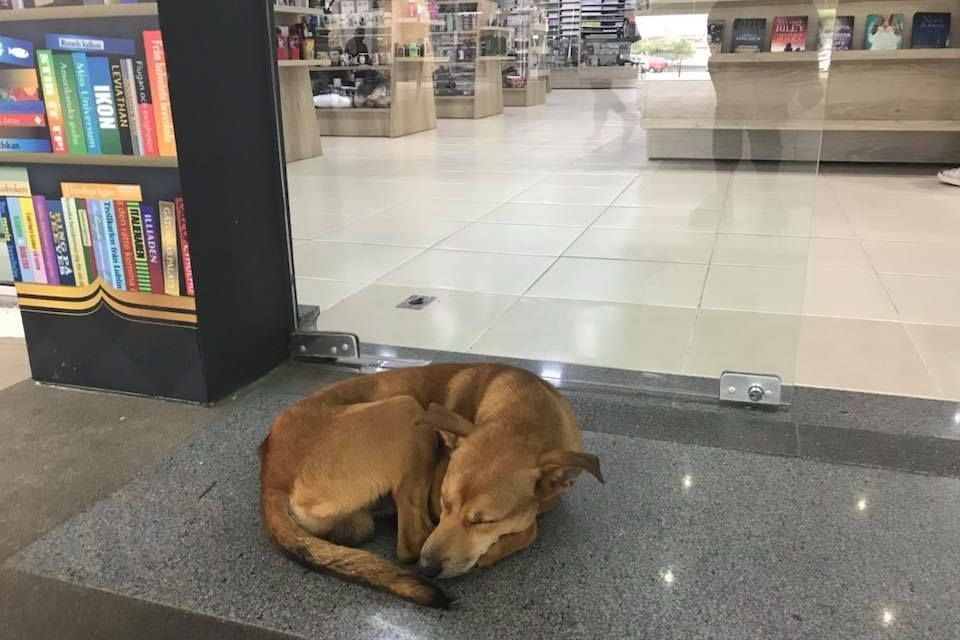 Homeless Dog Shoplifts Book on 'Abandonment,' Now Has Caring Foster Family