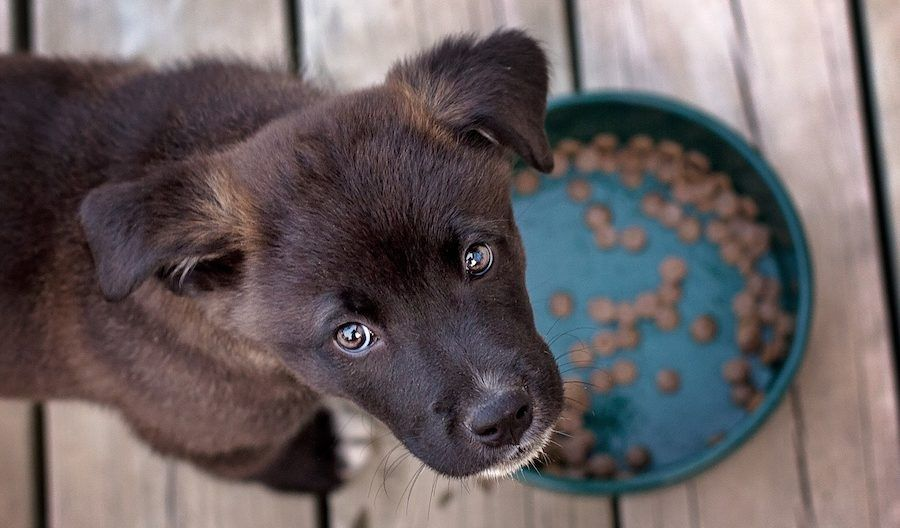 SIGN: Ban Dead Dog and Cat Remains in Pet Food
