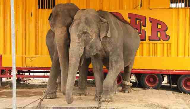 Victory! Stardust Circus Drops its Cruel Elephant Act