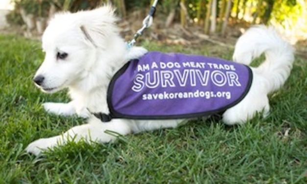 Puppy Rescued from S. Korean Dog Meat Farm is Becoming a Trained Therapy Dog