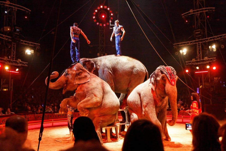 Elephant Dies when Circus Truck Crashes in Spain
