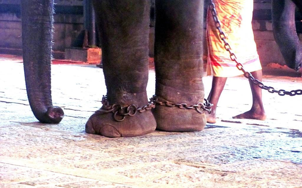 This Indian State is Cracking Down on Cruelty to Captive Elephants
