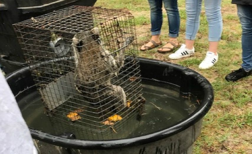 SIGN: Prosecute Teacher who Made Students Drown Two Raccoons and a Possum in Class