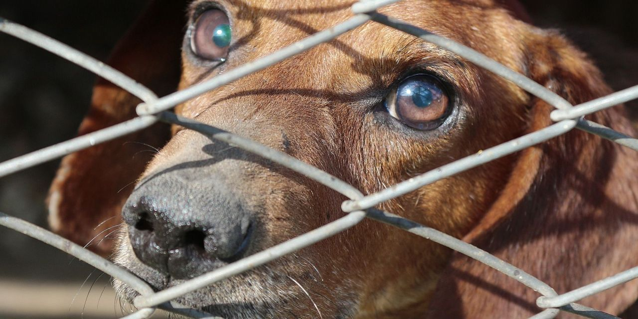 Dogfighter who Chained and Starved 100 Dogs Found Guilty on 214 Animal Cruelty Counts