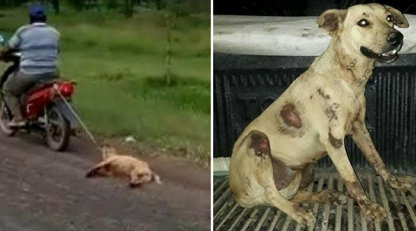 SIGN: Justice for Puppy Tied to Motorbike and Dragged Down the Street