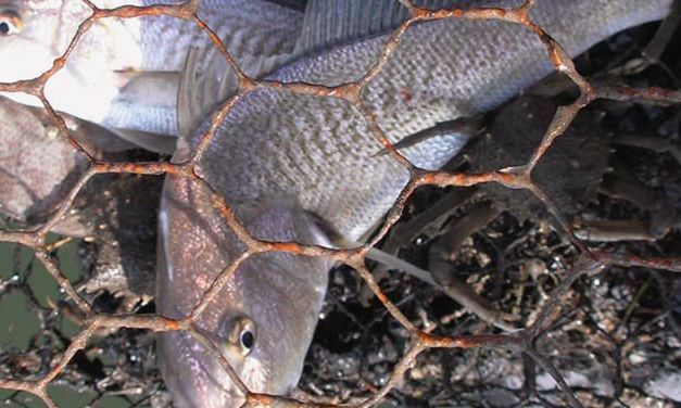 One Ghost Net Can Keep Killing Animals for 600 Years