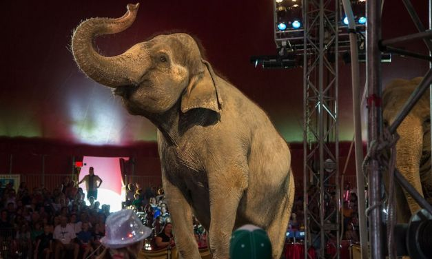 Europe's First-Ever Sanctuary for Former Circus Elephants is Coming Soon