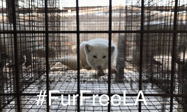Sign the Petition to Ban Fur in Los Angeles