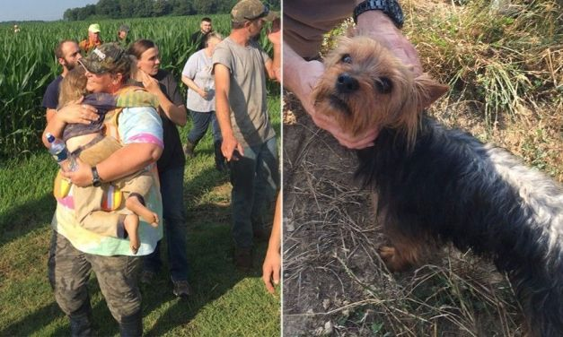 Loyal Dog Stays by Side of Little Girl Lost in Cornfield for 12 Hours