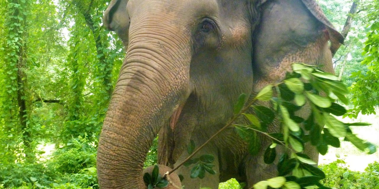 Major Travel Guide Publisher Pledges to Stop Listing Elephant Rides