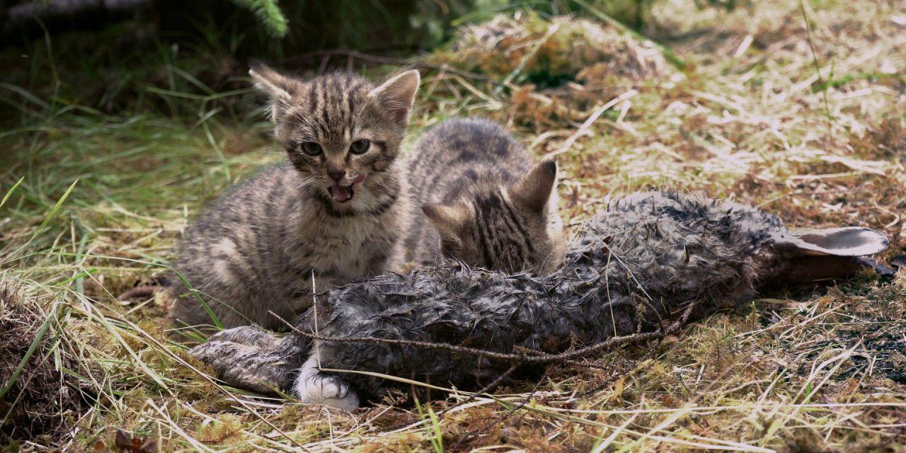 'Rarest Kittens Alive' Rescued from Scottish Roadside