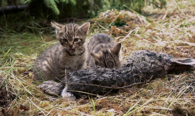 'Rarest Kittens Alive' Rescued from Scottish Roadside
