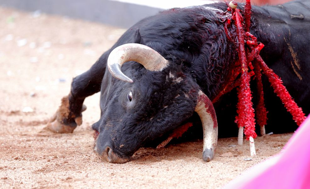 SIGN: Stop The Gruesome Bloodsport of Bullfighting in Spain