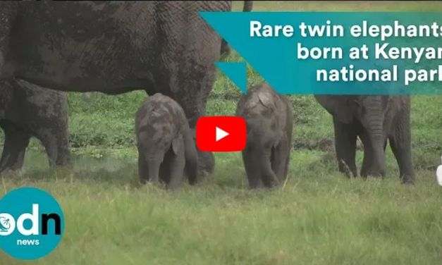VIDEO: Elephant Twins Born in Amboseli National Park for First Time in Nearly 3 Decades