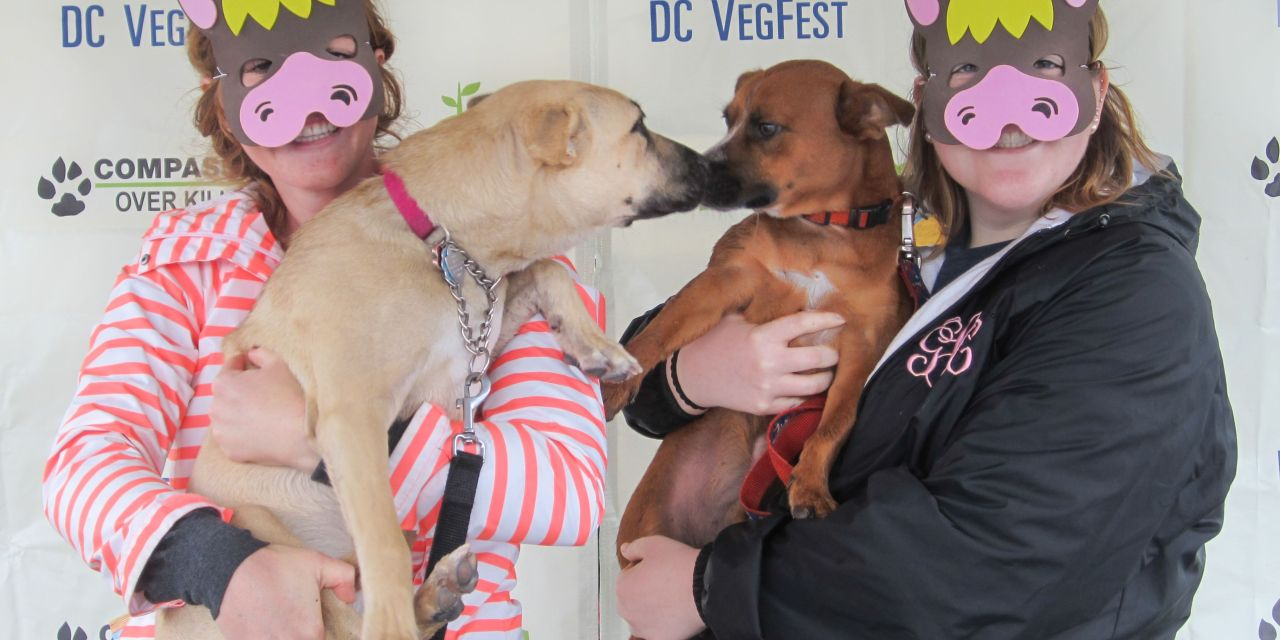The 10th Annual VegFest is Coming Soon to DC