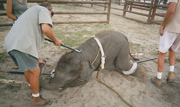 SIGN: Ban Cruel Use of Circus Elephants in Germany