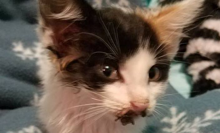 SIGN: Justice for Kittens with Mouths Cruelly Glued Shut