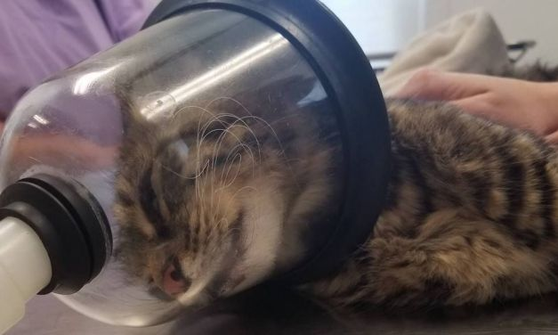 SIGN: Justice for Sweet Cat with Firecracker Blown Up Inside Her