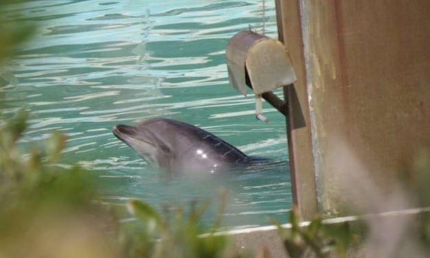 SIGN: Free Honey, The World's Saddest Dolphin