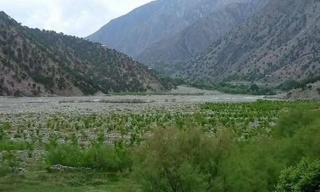 Pakistan is Planting 10 Billion Trees to Help Cope With Climate Change