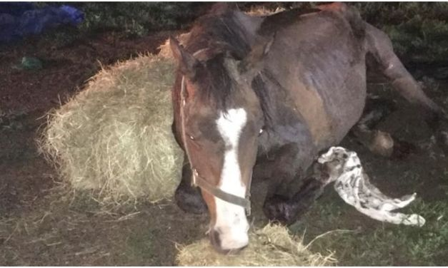 SIGN: Justice for Skeletal Horse Left to Starve to Death in the Mud