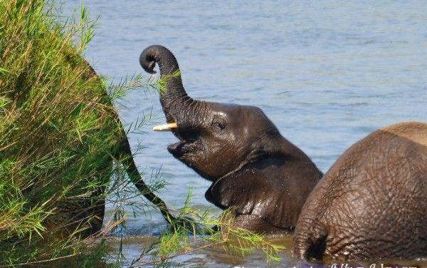 Video: Splashing Baby Elephants Know How To Do Summer Right!